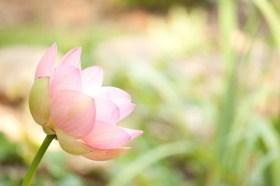 lotus640