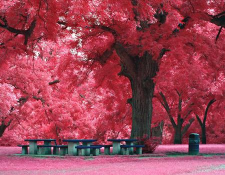 Cherry Blossom Wallpaper Hd Index Of Uploads 2012 05