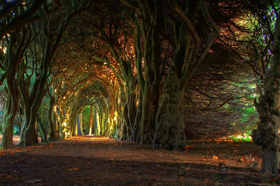 fairytale tree tunnel, ireland