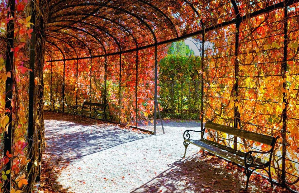Fall In Central Park Wallpaper Autumn In Vienna Austria Photo One Big Photo