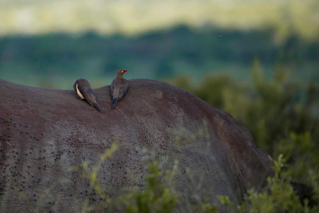 safari_170322