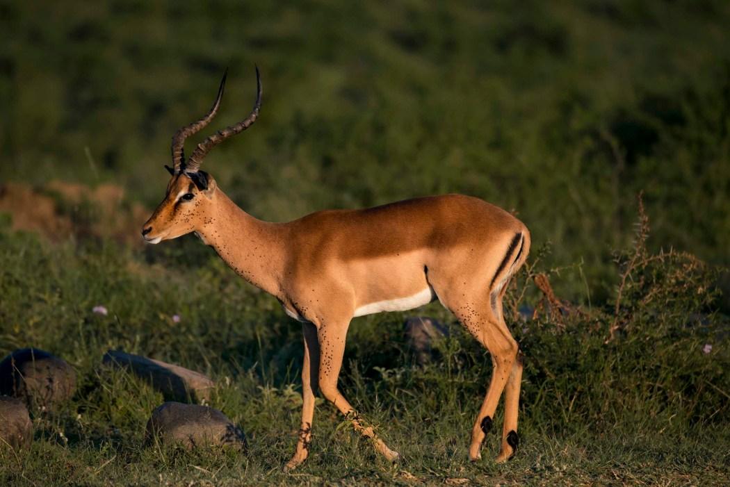 safari_170322_17