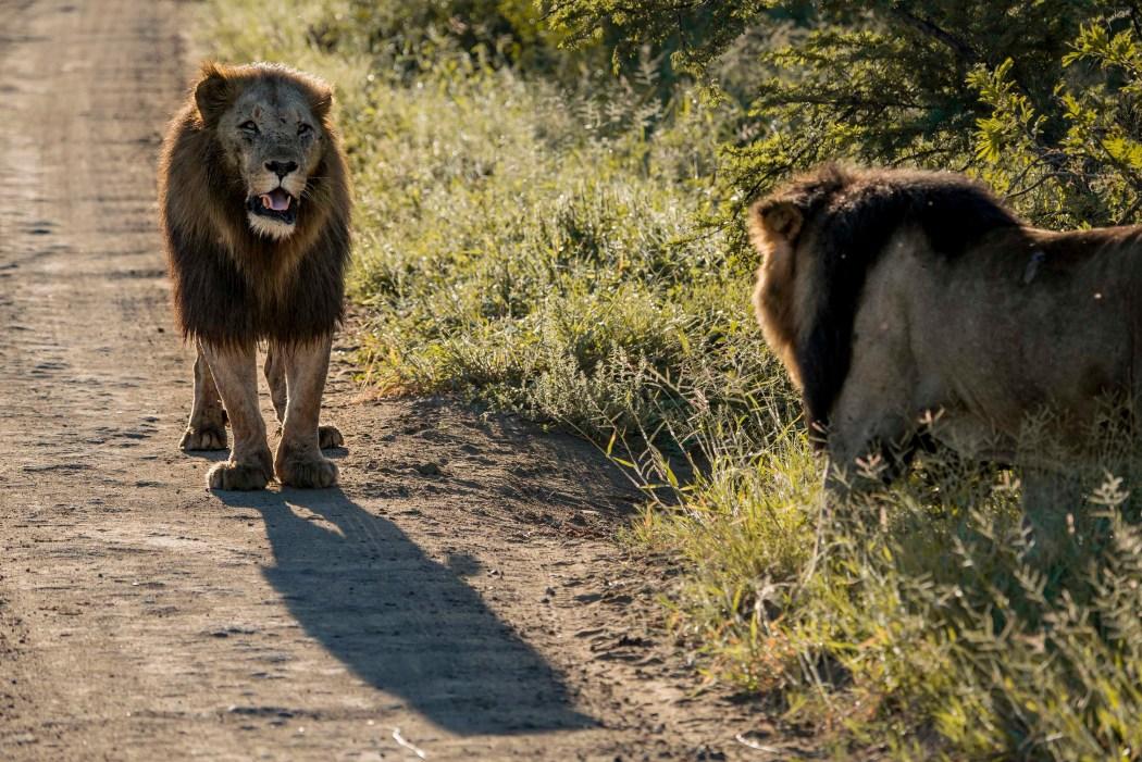 safari_170322_22