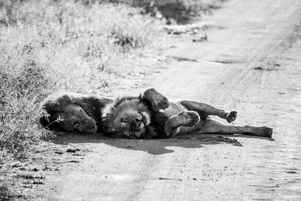 safari_170322_23