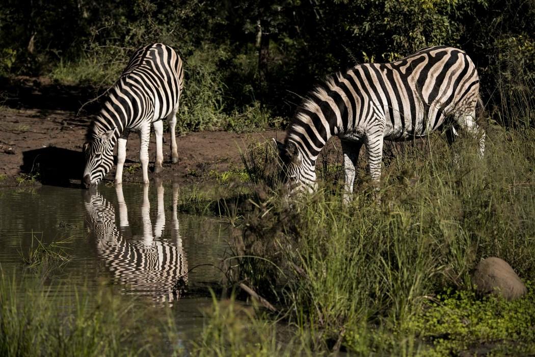 safari_170322_4