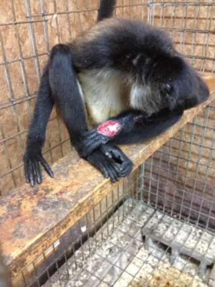 Baby Newborn Teeth Cruelty Alert Natural Bridge Zoo Reopens Animals
