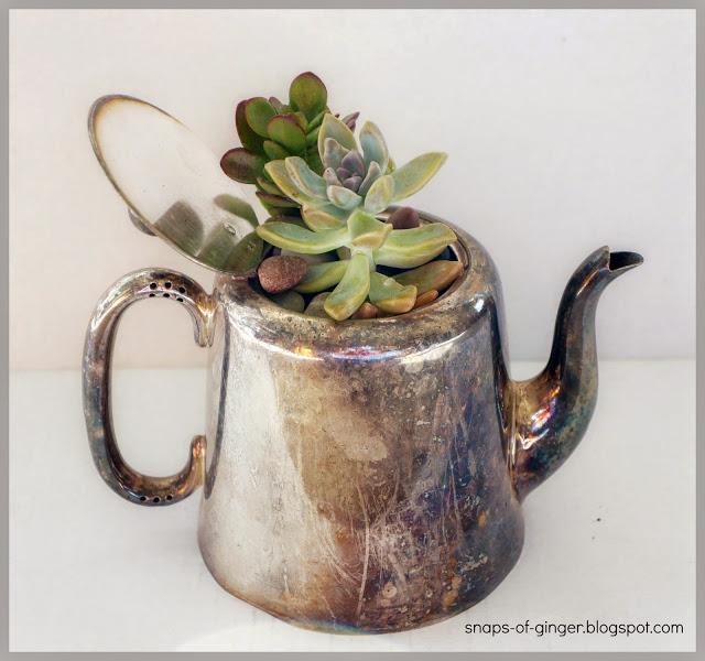 Darling succulent planter