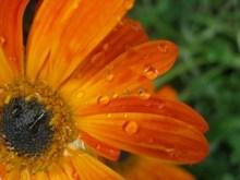 Iven Li Orange Drops_2