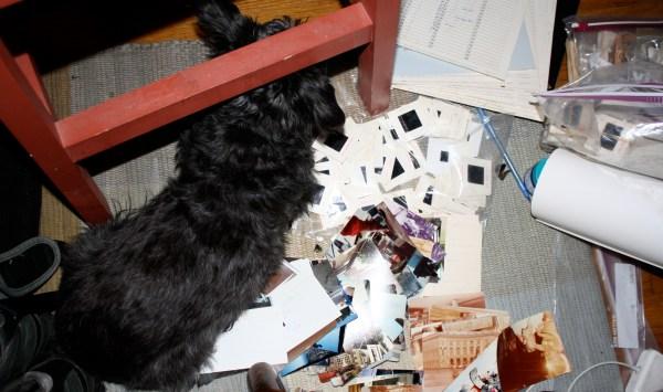 Zoe likes to be helpful.