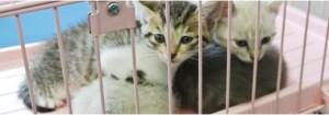 愛知県動物保護管理センター東三河支所