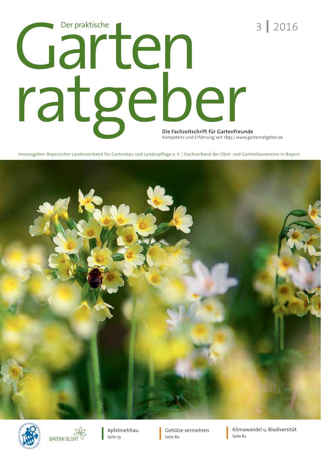 Rote Küchenzwiebel Gartenratgeber 03 2016 Pages 1 14 Text Version Fliphtml5