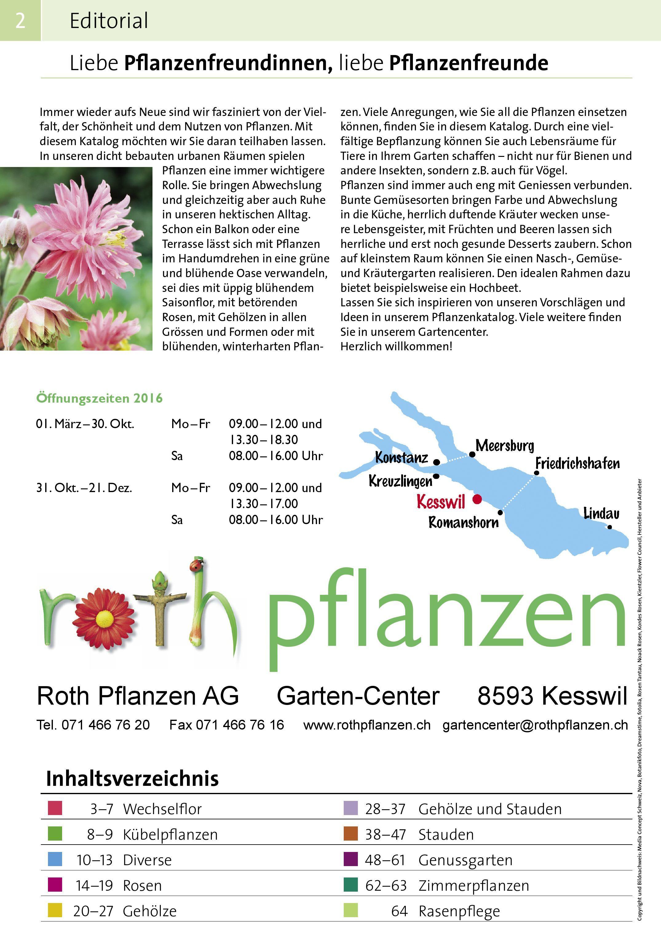 Winterharte Chrysantheme Sorte Korejanka 7 Staude  8,5cm Ballen XXL 1x Staude