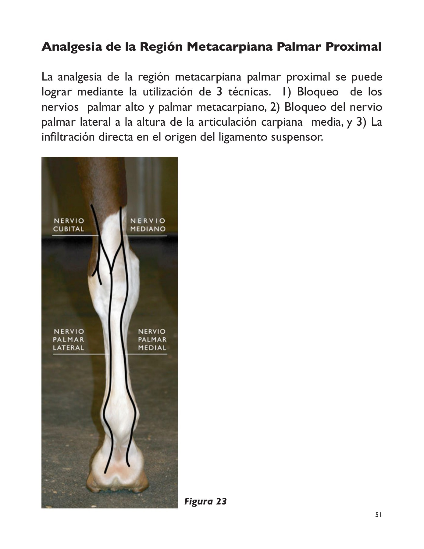 Musculo Miembro Pelviano Caballo Remevet Equinos No 1 Pages 51 100 Text Version Fliphtml5