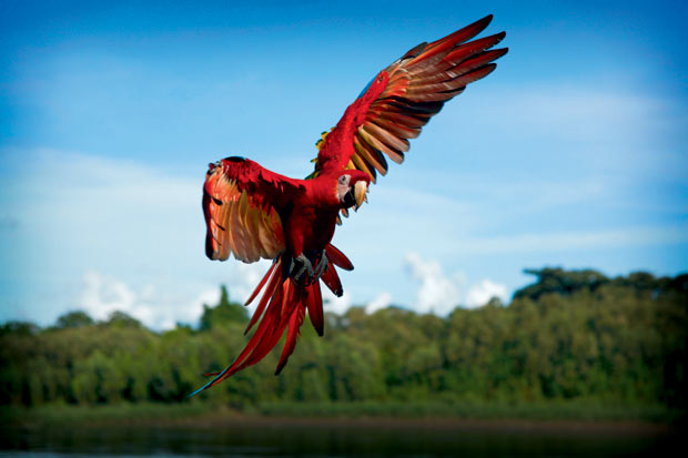 India Wallpaper 3d Hd Earthflight Gives A Bird S Eye View Of The World Must See