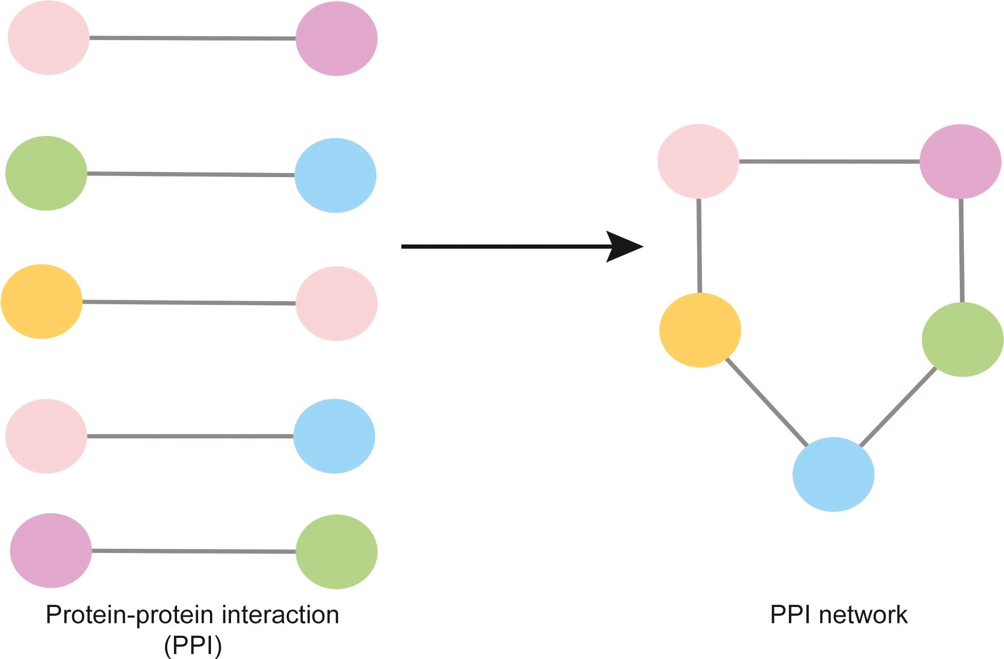 Protein Protein Interaction Network An Emerging Tool For Understanding Fish Disease In Aquaculture Waiho 2021 Reviews In Aquaculture Wiley Online Library