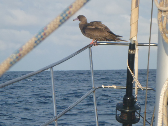 on the horizon line sailing blog cruising galapagos islands in pacific