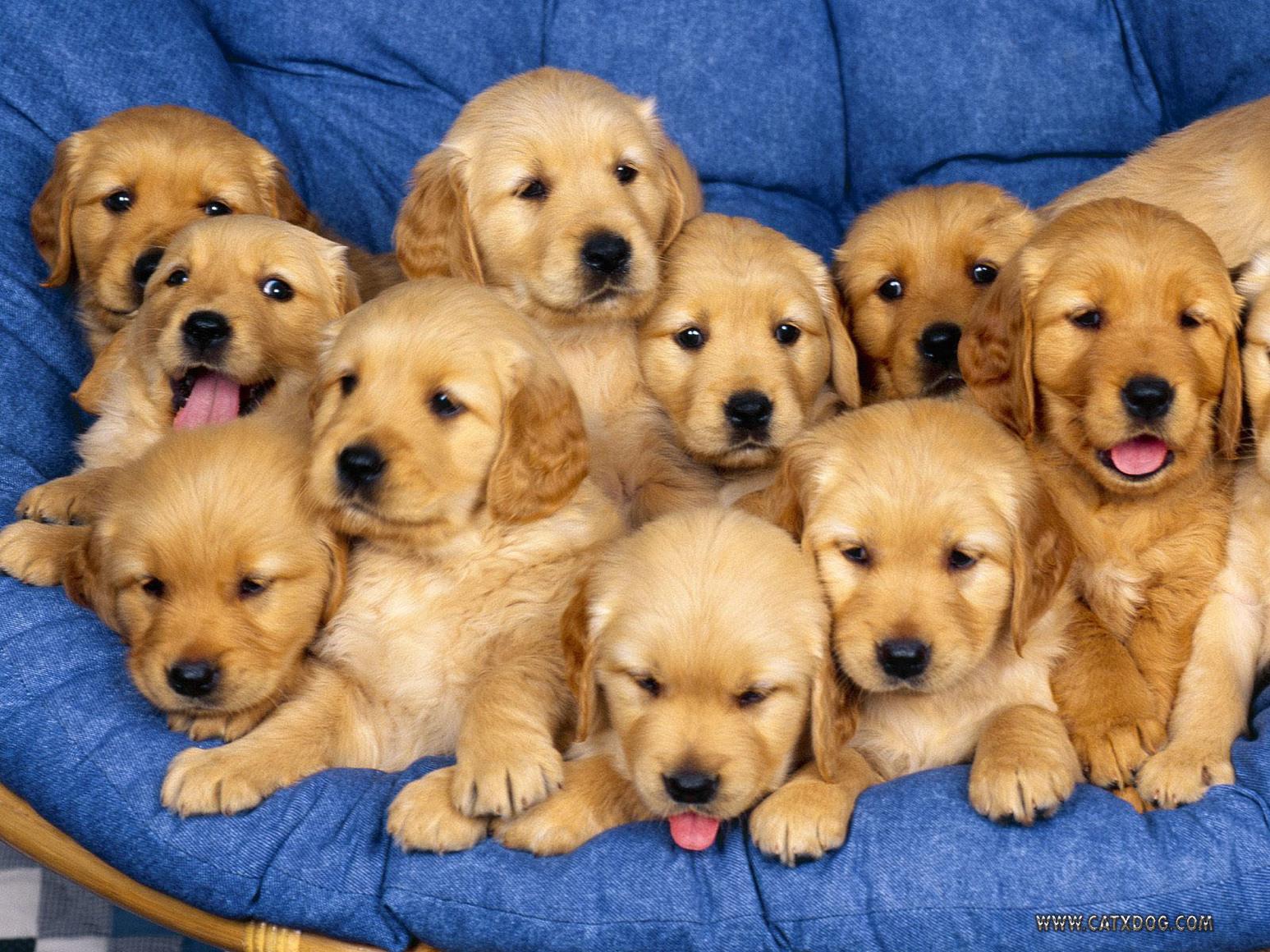 Cozy Puppy Pictures - Ivoiregion