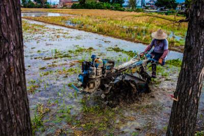 A farmer near Kaiping