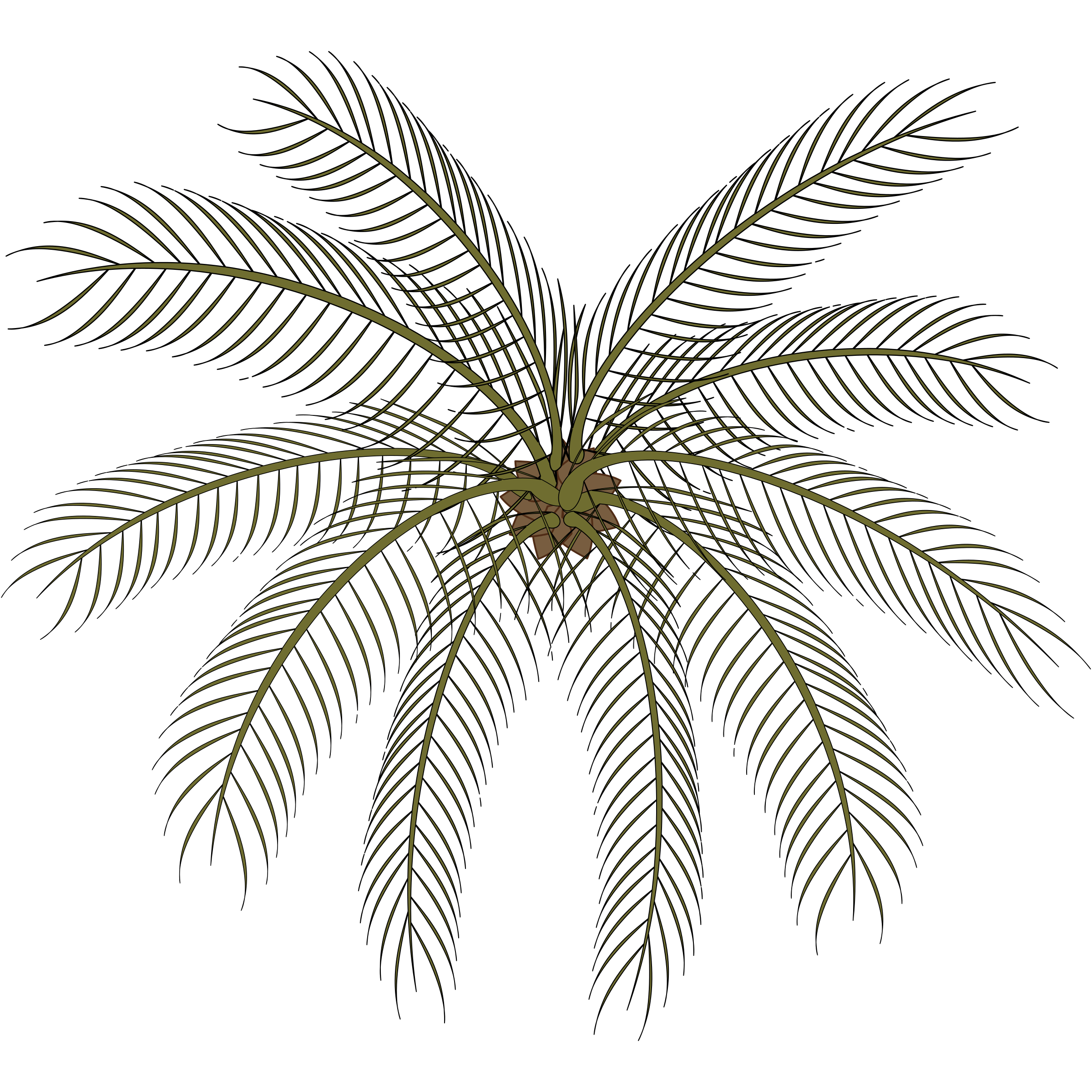 Palm Tree Top View Png Clipart Palm 02a