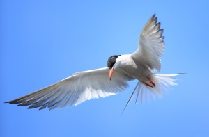 bird-in-flight-246737