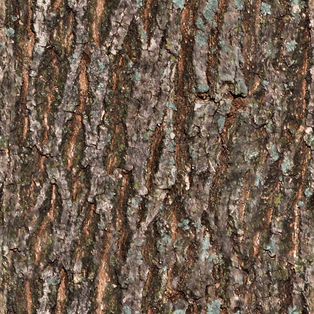 Hd Wallpaper Pack Seamless Tiling Tree Bark Texture Bark 1024 Colcor Png
