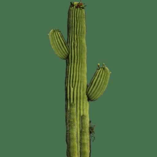 Alphabet U Wallpapers 3d Cactus Sprite Texture Qubodup Jacobimmugatu Ccbysa Gpl
