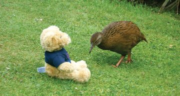 An Introduction to Weka