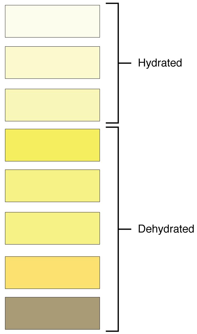 251 Physical Characteristics of Urine \u2013 Anatomy and Physiology