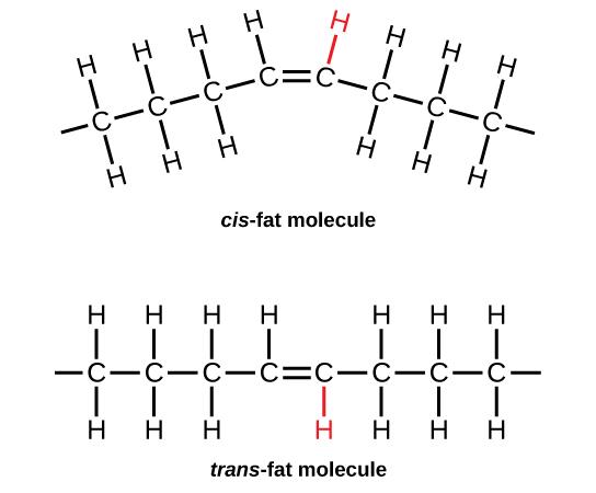 23 Biological Molecules \u2013 Concepts of Biology-1st Canadian Edition