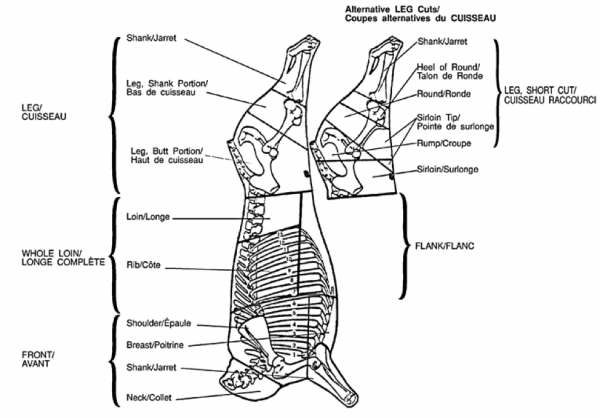 cut leg diagram