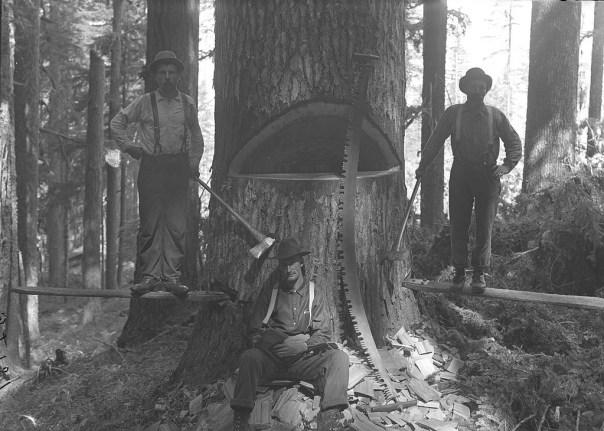 Three men with saws från Field Museum Library. Inga kända copyright-begränsningar.