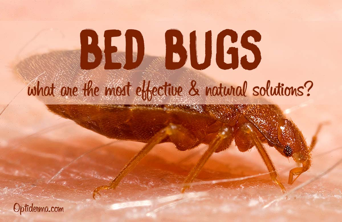 Sprays For Bed Bugs The Best Natural Bed Bug Sprays Effective Solutions
