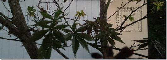 Comment agrandir un jardin : plante feuillage fin