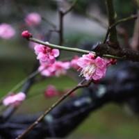 DAY1111!!!!桜の時期に向けて📸🌸📸