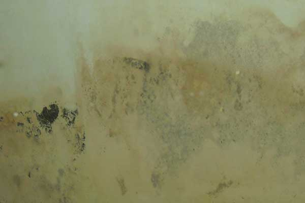 How To Kill, Remove, And Cleaning Mold On A Walls | Orange Mold