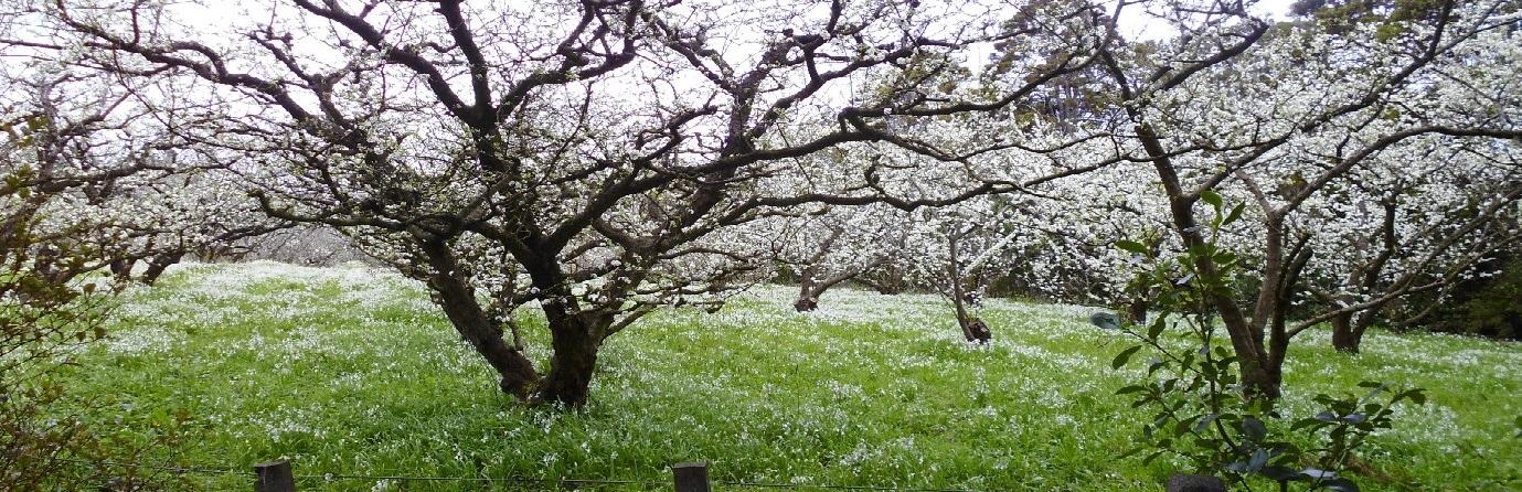 spring-in-oratia 2