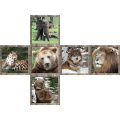 V-CUBE 2 - Wild Animals Print