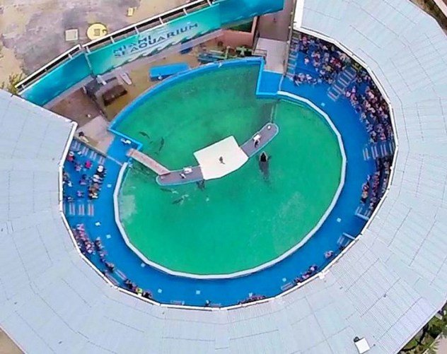 zdroj: http://www.browardpalmbeach.com/news/lolita-the-orca-activists-lose-court-battle-7055319