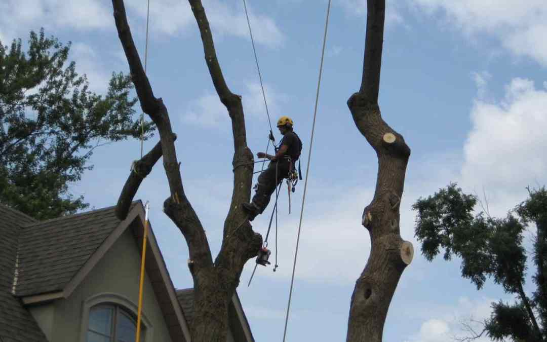 Introducing OrchardPeople.com Continuing Education Credits for ISAO Certified Arborists
