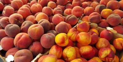 Peaches…already…Happy 4th!