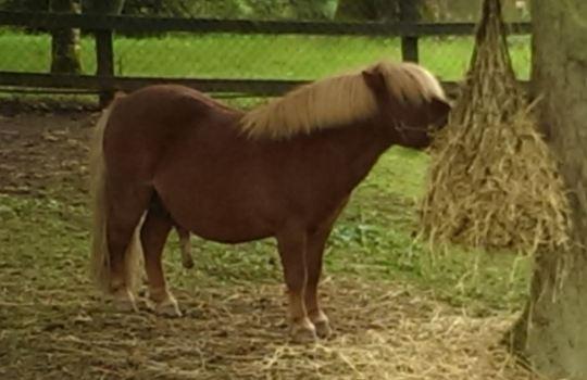 boris horse