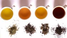 640px-Tea_in_different_grade_of_fermentation[1]