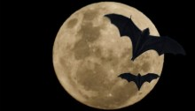 full moon and bats