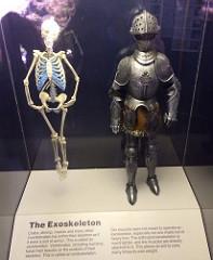 exoskeleton photo