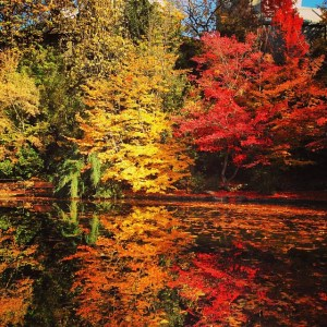 Central Park In Fall Wallpaper Oregon Fall Foliage Weekly Update 11 2 2013 Oregon Fall