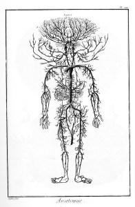 Planche d'anatomie, Encyclopédie, 1762