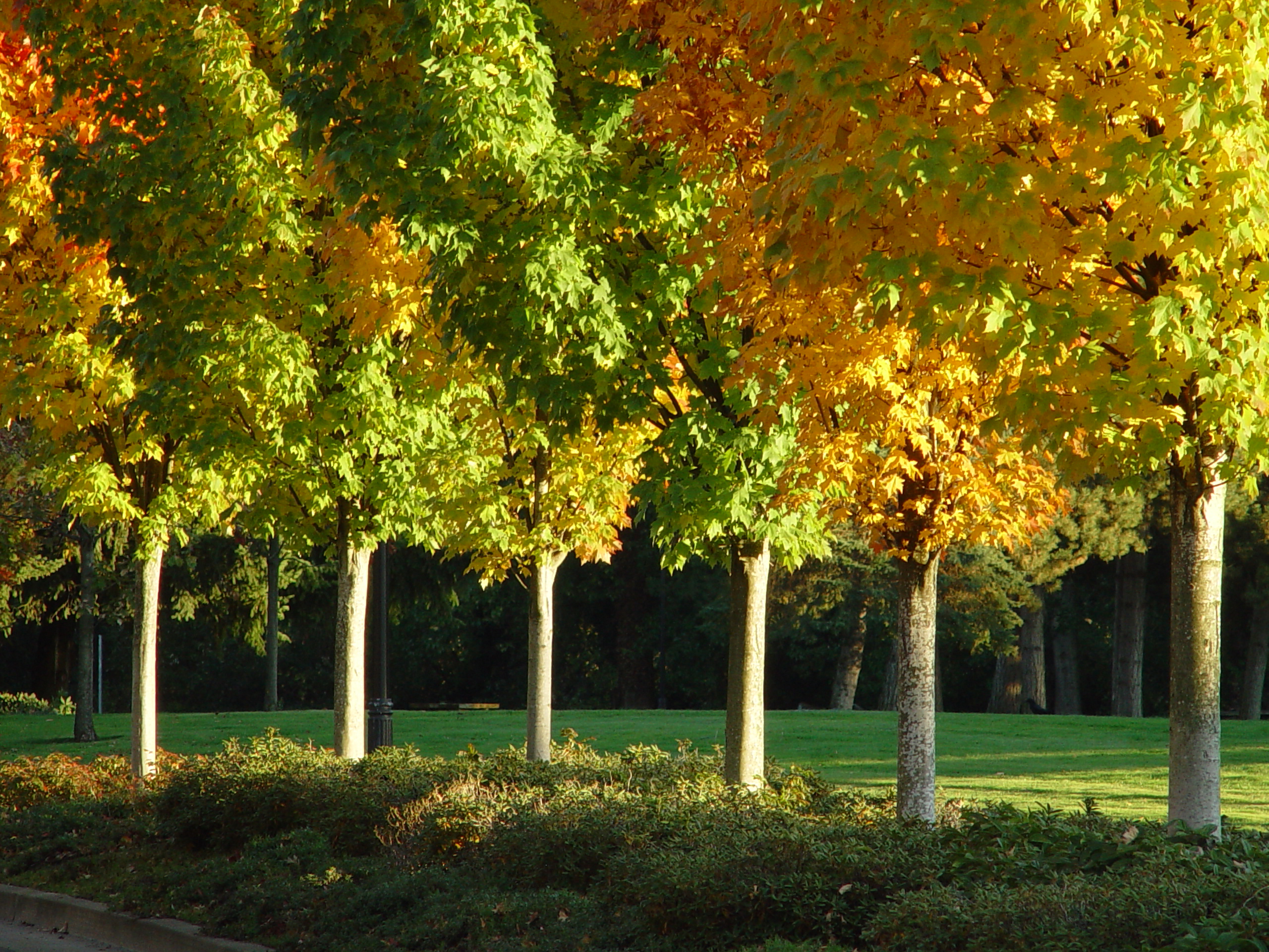 Fall Trees Wallpaper Urban Forestry 187 Orem
