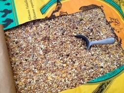 Rodzaje nasion paszowych