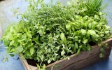 How to Grow Vegetables in Small Spaces