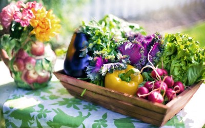 What to Do in the Organic Garden Every Day